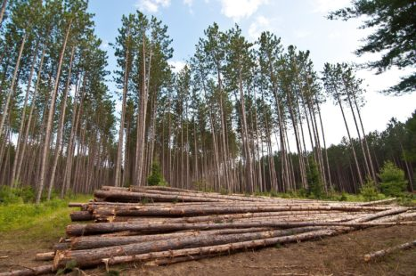 Softwood Lumber Dispute in Context